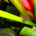 Flora and Fauna Costa Rica