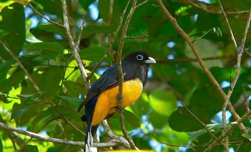 Carara National Park