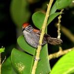 Corcobado National Park Costa Rica