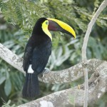 Negritos Island Puntarenas